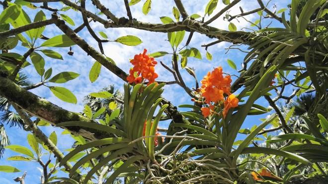 Botanic Gardens_Orchids_Singapour (27).jpg
