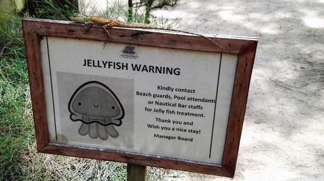 Warning gecko jellyfish-Ho Tram Beach Boutique hotel resort & spa-Ho Tram-Vietnam-Lemonandjuice  (2).jpg