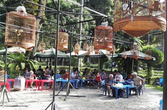 Bird café Parc Tao Đàn Saigon Vietnam (18).jpg