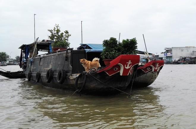 Bateau marché flottant, delta du Mekong, Vietnam