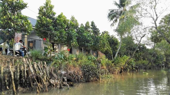 Rive d'un arroyo delta du Mekong Vietnam